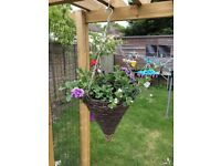 summer hanging baskets
