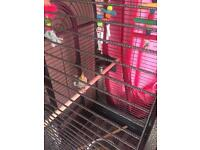 Cockatail (parrot) with robust grey metal cage