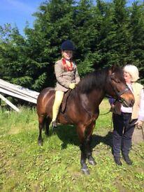 Harry, 12 year old Dartmoor Pony, 11.2.