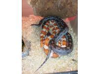 Vivarium/ fish tank