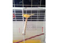 Yellow Canary With Cage