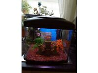 Fish tank full tropical set up 48 litres