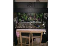 3ft fish tank, including filter,heater & gravel