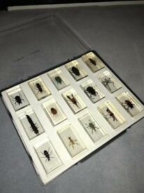 Bug Collection Bundle