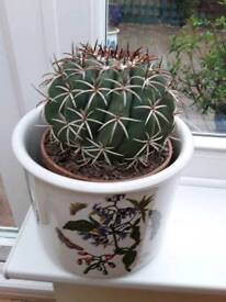 9th Cactus £20 and option to buy Portmerrion pot £20