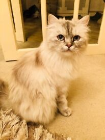 Beautiful loving cat looking for her forever home
