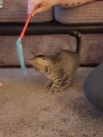 kitten 13 weeks