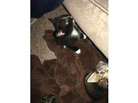 Playful child friendly kittens for sale