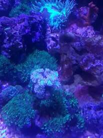 marine skimmer and corals