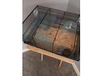 Hamster female white russian dwarf