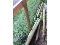 Fence posts, 3 inch diameter, eight, 54 inch long