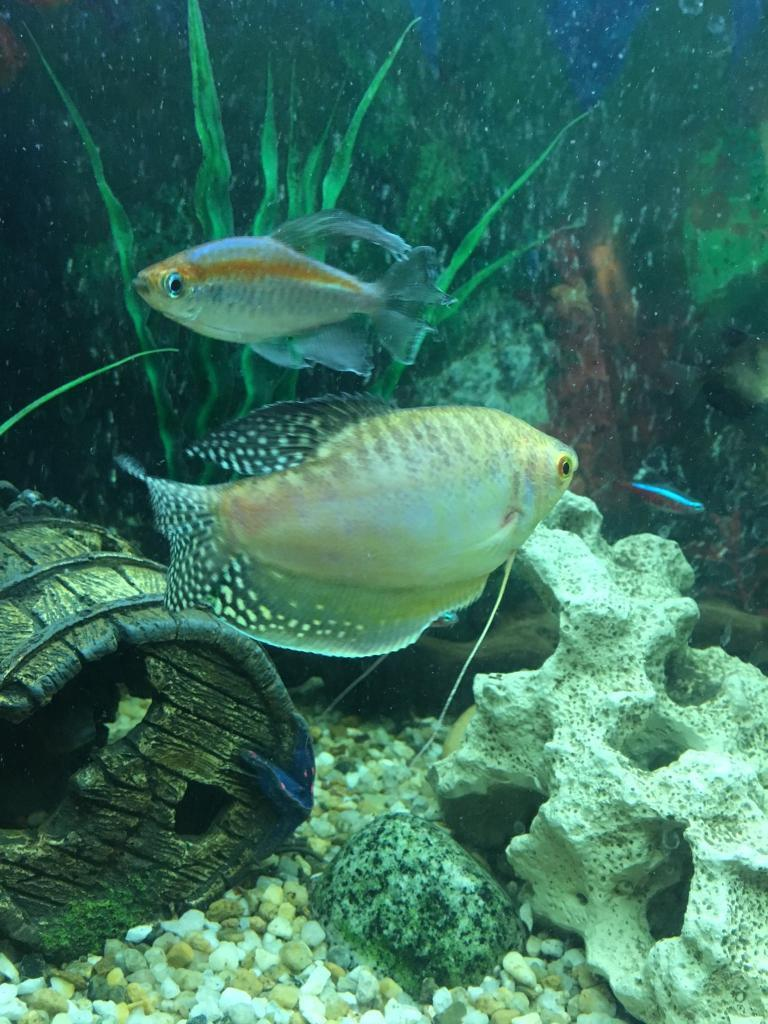 Aquarium fish tank for sale in london - Giant Fish Tank For Sale Image 1 Of 9