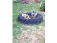 Tractor tyre fitness gym equip/boot camp/football groups or a garden feature