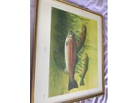 Limited Edition framed print of Rainbow Trout