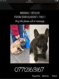 Stolen frenchbulldogs