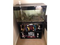90 ltr Fish tank and stand with tropical fish includes