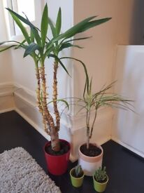 4 lovely indoor plants