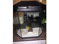 Fish tank (50p) shape