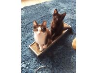 2 male kittens looking for a forever home as a pair