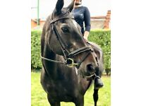 Ex police horse/happy hacker
