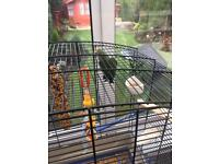 Love bird and cage for sale