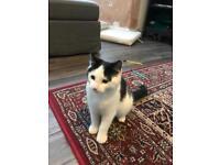 kitten found