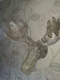 Moose head wall hanging