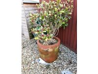 Large Terracotta Plant Pot