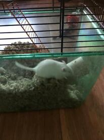 Two male baby gerbles and cage for sale
