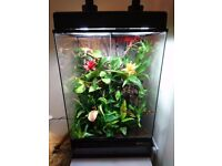 90cm Exo Terra fully live planted bioactive