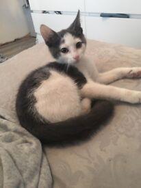 Lovely grey and white kitten