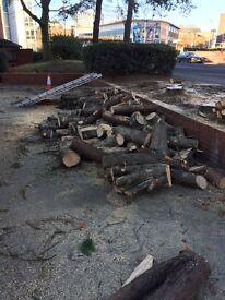 Free softwood logs