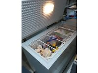 Bosch chest freezer