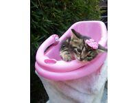 kitten girl 1 left barking