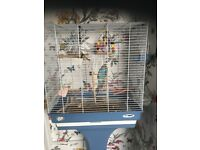 6 month old blue budgie, not hand trained, cage stand and accessories included.