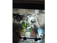 8 Angel fish & 1 catfish