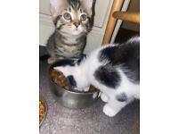 Kittens cats mix breed