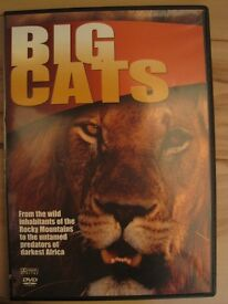 Big Cats- DVD
