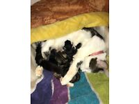 Stunning newborn kittens looking for their forever loving home