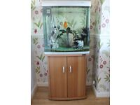 Tropical Fish Tank, Cabinet, Variety of Fish and Accessories