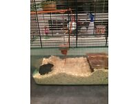Gerbil and cage , food , bedding etc