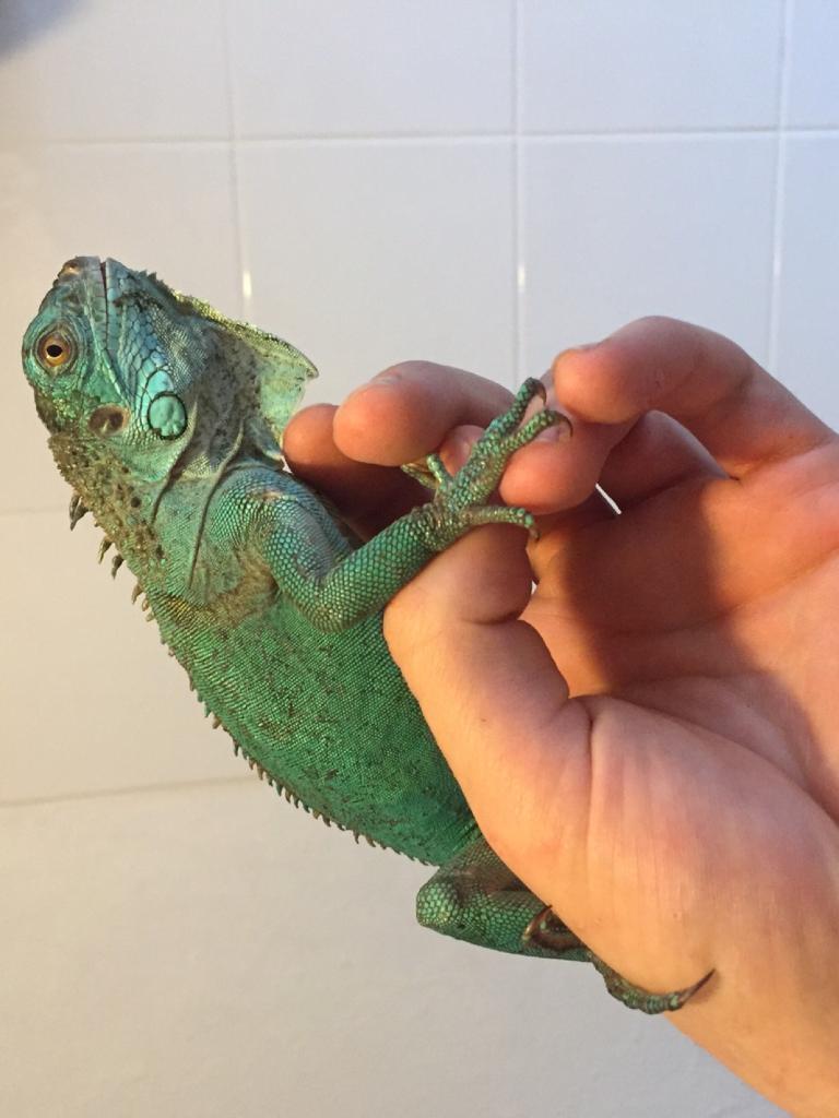 Blue iguana price drop £200