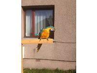 Blue and gold mccaw parrot