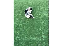 shih tzu Adorable puppies ❤️