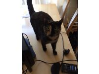 2 Female Tortoiseshell Cats For Sale to a loving home, aged 2, neutered.