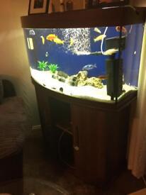 Fish tank juwwl vision 180