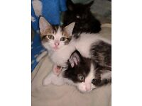 3 Gorgeous..playful kittens ready NOW!!