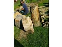 Oak Tree stumps