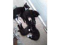 Lovely and soft kittens