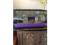Give 2 dwarf hamsters and the cage